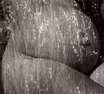 Cosecha - Ruth Bernhard