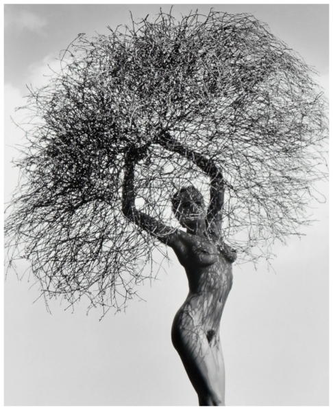 herb-ritts-neithwithtumbleweed.jpg