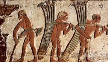Hombres recolectando papiros para hacer una barca.jpg